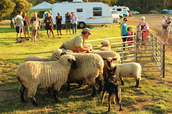 Huon Valley Caravan Park: Getting ready for shearing