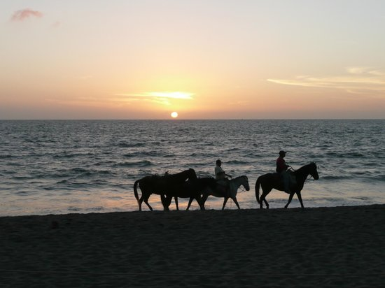 ‪‪Crown Paradise Golden Resort Puerto Vallarta‬:                   horses on beach at sunset