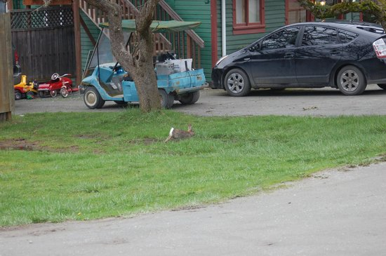 Deer Harbor Inn: Some rabbit