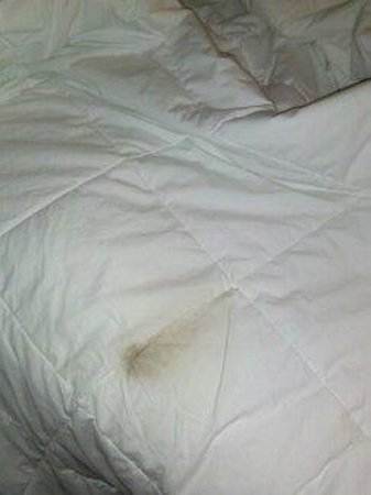 Days Inn Jacksonville Baymeadows:                   marks that were found on sheets and we just checked in