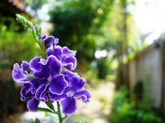 The Garden House: Gartenanlage