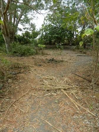 Amy B.H. Greenwell Ethnobotanical Garden : Overgrown and unmaintained