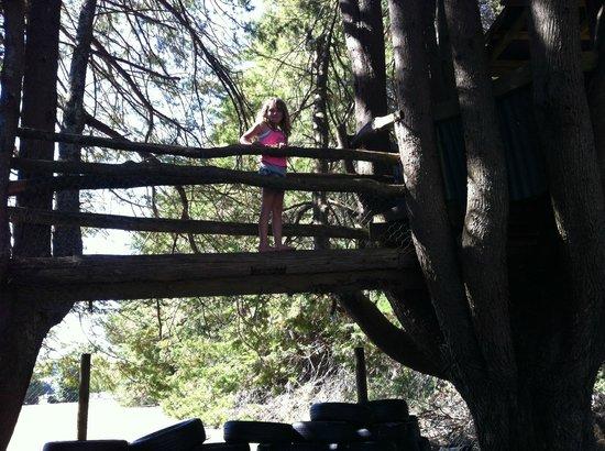 All Seasons Holiday Park Rotorua : Tree Huts