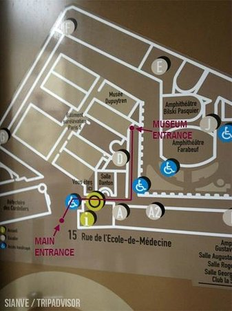 Musée Dupuytren Paris : How to get there