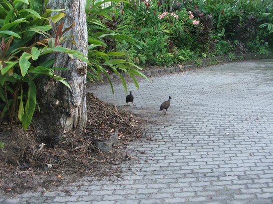 Sheraton Mirage Port Douglas Resort: wildlife around grounds