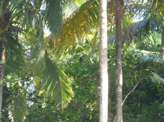 Sea Breeze Lodge: if you squint you can see a monkey!