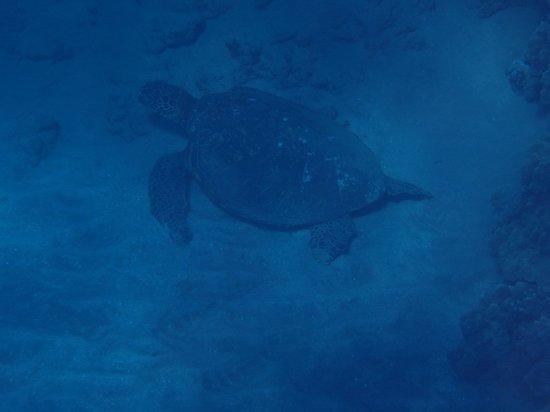 Aqua Adventures: Turtle