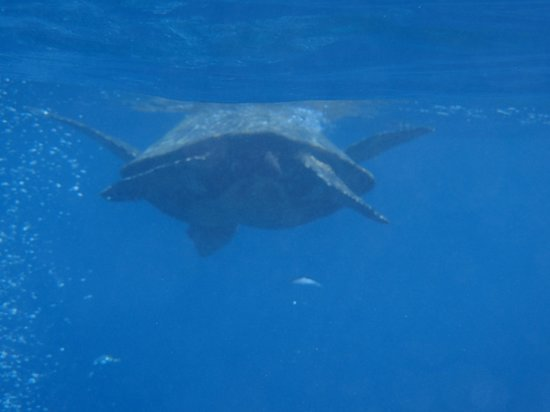 Aqua Adventures: Turtle that popped up right in front of me,