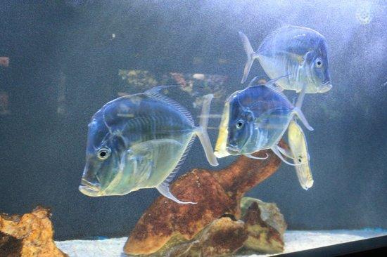museo oceanografico monaco - pesce mediterraneo 2 ...