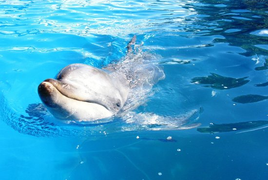 Pet Porpoise Pool - Dolphin Marine Magic: playful encounter