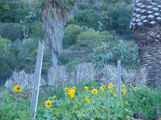 Incredibile sul lago gi i girasoli in fiore a marzo foto di lo specchio di venere - Venere allo specchio ...