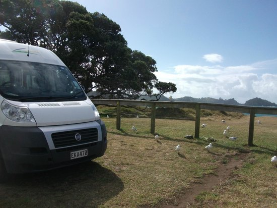Otamure Bay (Whananaki) Campsite: our pitch