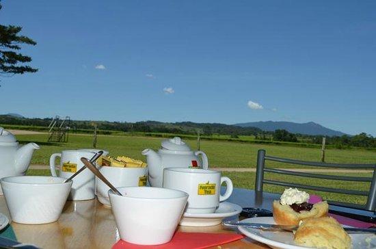 Nerada Tea Plantation : WHAT A VIEW WHILE YOU ENJOY.