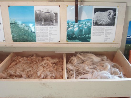 The Point Sheep Shearing Show: Sheep Info