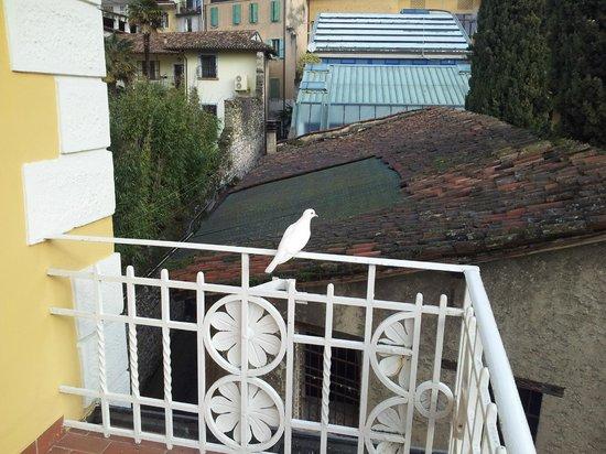 Hotel Lepanto: Vista Balconcino, si era appena appoggiata una colomba