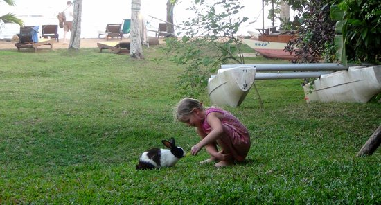 Palm Villa: Playing with the pets