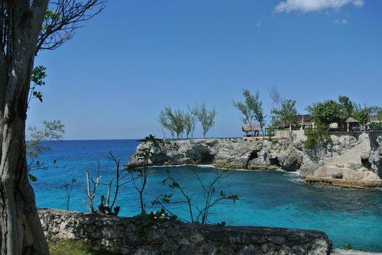 Citronella: The view