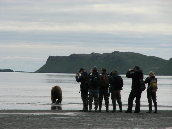 Wonderful adventure picture of alaska bear adventures homer