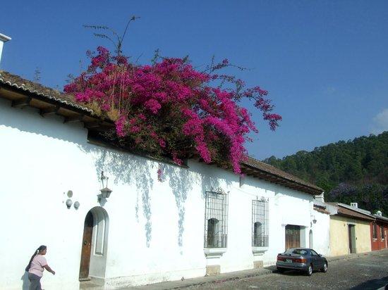 Camino Real Antigua: alrededores