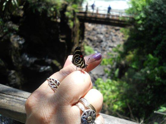 Puerto Iguazú Arts and Crafts Market : Una de las tantas miles de mariposas multicolores que habitan allí