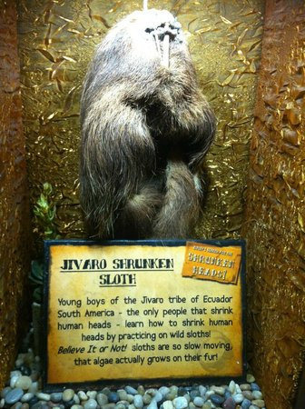 Ripley's Believe It or Not! San Antonio: Who knew you could mummify a sloth??