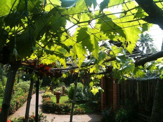 Abad Whispering Palms Lake Resort: Grapes.....
