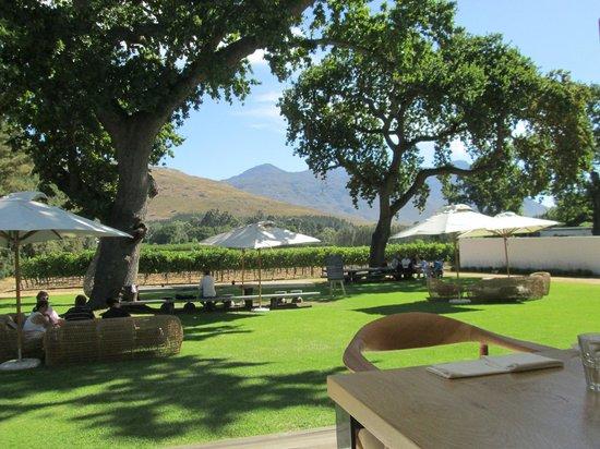 View from Franschhoek vineyard