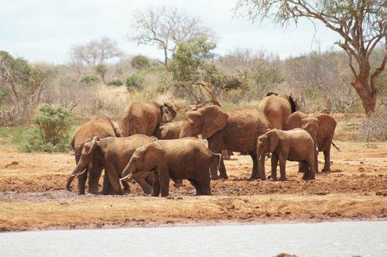 Sentrim Tsavo East: elefanti
