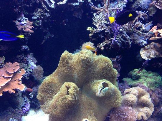 Bubble Coral Picture Of Downtown Aquarium Houston