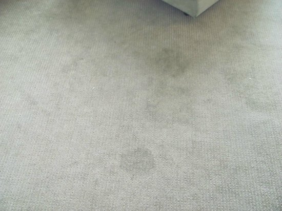 Heat Hotel: Stained carpet (this was just a small area of the stains)