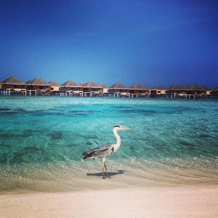 Adaaran Prestige Vadoo: beach...