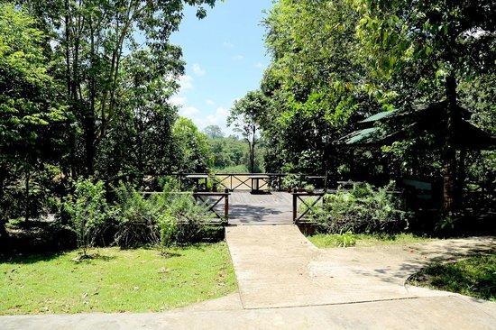 Proboscis Lodge Bukit Melapi : Proboscis Lodge