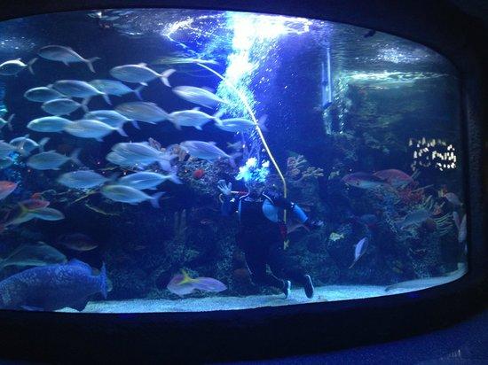 Main Tank W Diver Picture Of Aquarium Kemah Tripadvisor
