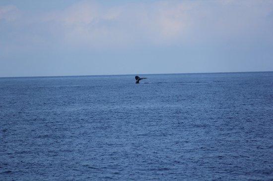 Ocean Sports Whale Watch Adventure: A whale tail