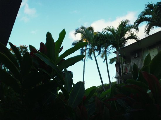 Pacific Marina Inn Airport: Everyone should wake up to palm trees their first morning in Hawai'i.