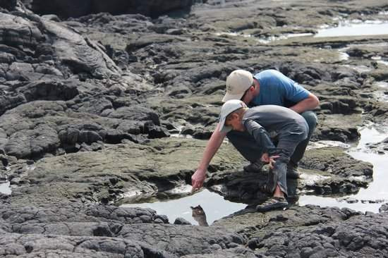 Pu'uhonua O Honaunau National Historical Park: Checking out the tide pools