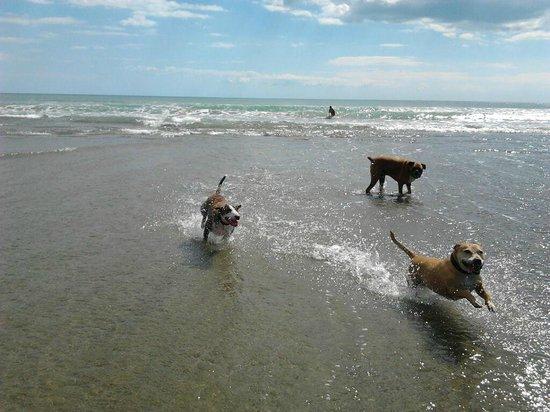Bethells Beach : dog friendly beach