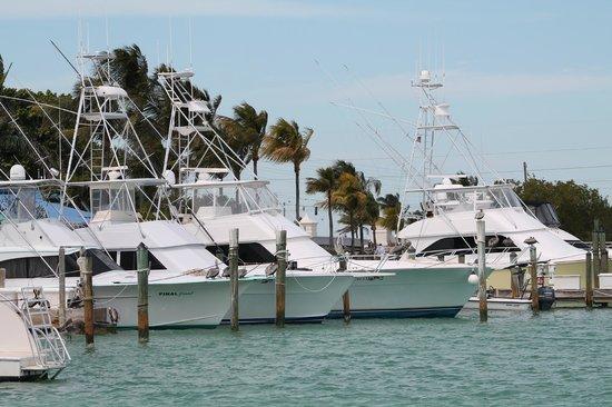 Hawks Cay Resort: Marina Area