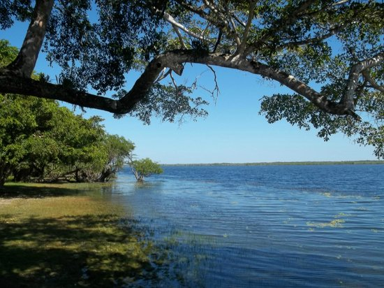 Crooked Tree Lodge: a view from the shore area in front of cabanas