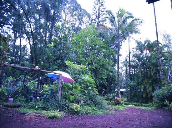 A Beautiful Day, Nani La 'Ao: beautiful trees on property surrounding the cabin