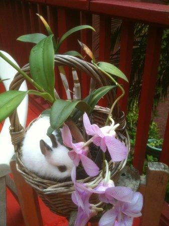 A Beautiful Day, Nani La 'Ao: more orchids