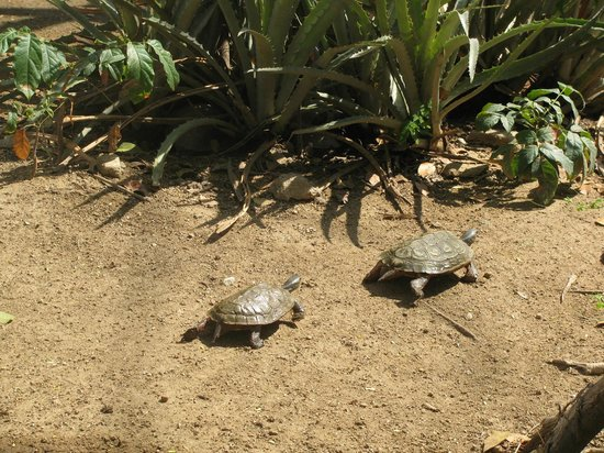 Dreams Huatulco Resort & Spa: Turtle Conservatory Tour