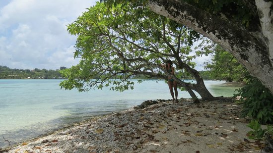 Erakor Island Resort & Spa: Tree 1.5 metres from our Bungalow Deck