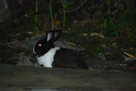 Hotel la Terraza: Tommy the hotel bunny - he is only there at night.