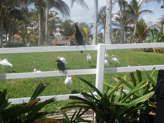 "Grand Oasis Cancun: Visitors at ""Happy Chicken"""