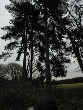 Delamere Forest: forest trip