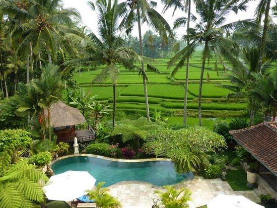 Villa Orchid Bali: Blick vom Pool und Pavillon auf Reisterrassen