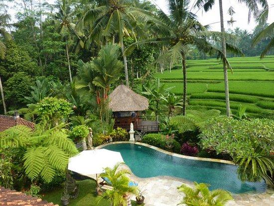 Villa Orchid Bali: Pool und Fruehstuecks Pavillon