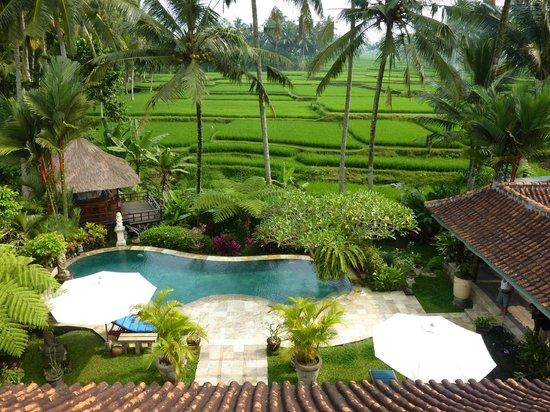 Villa Orchid Bali: Blick vom Pool ueber Reisterrassen