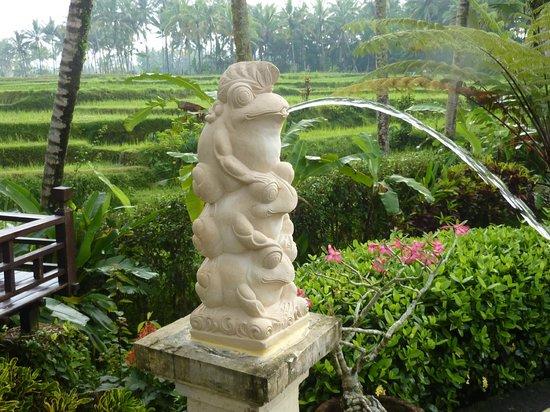 Villa Orchid Bali: Froesche mit Reisterrassen